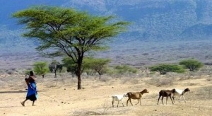 A pastoralist with livestock in Kenya.